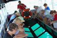 Glass-bottom-boat.jpg1